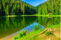 landscape by the lake in the early morning. coniferous forest near the lake in mountains