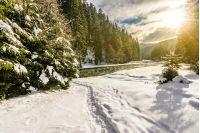 frozen river among spruce forest with snow on the ground in carpathian mountains in evening light