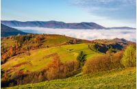 gorgeous morning in mountainous rural area in autumn. wooden fence along the grassy rolling hills with hay stacks fall in to the valley with thick rising fog