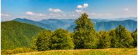 gorgeous mountainous panorama with forest in early autumn day
