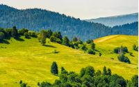 beautiful summer landscape. green grassy meadow on a hillside on top of mountain ridge with some forest