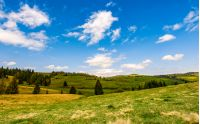 grassy meadow near spruce forest on the hills. beautiful springtime landscape. good weather with blue sky and few clouds.