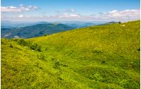 grassy meadow of mountain ridge. beautiful summer landscape in fine weather