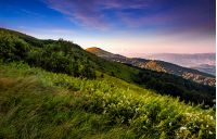 grassy meadow on a hillside at beautiful reddish sunrise. gorgeous summer mountain landscape