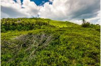 summer mountain landscape. grassy meadow on the top of hillside in Carpathians.