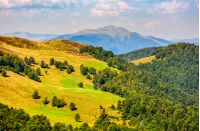 beautiful summer landscape. green grassy meadow on a hillside on top of mountain ridge with some forest down the hill