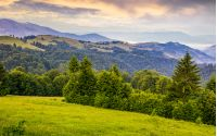 green meadows and forest of the Carpathians. beautiful landscape in mountains at purple sunrise in summer