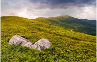 high mountain idyllic landscape. grassy meadow with boulder on hillside. beautiful nature.