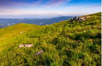 grassy meadow with giant boulders on hillside. mountain ridge on a beautiful sunny summer day. wonderful Carpathian landscape