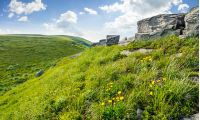 mountain summer landscape. meadow with huge boulders among the grass and dandelion flowers on top of the hillside meadow near the peak of mountain ridge