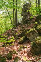 huge mossy cliff in the forest. beautiful nature scenery in spring. wild beech forest