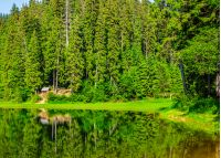 landscape near the lake among conifer forest  in the early summer morning
