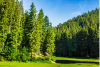 landscape near the lake among conifer forest in mountain