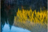 beautiful abstract nature background of lake surface reflecting spruce forest at sunrise textures