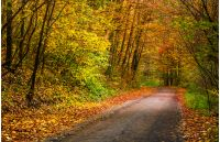 light spot on the road turnaround in autumn forest. beautiful nature scenery with lots of colorful foliage on hillside