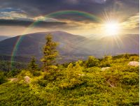 lonely conifer tree and stone on the edge of hillside with path in the grass on top of high mountain range in evening light under the rainbow