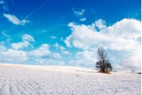lonely tree on a snowy hillside. lovely nature scenery on fine winter day with cloudy blue sky