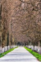 Longest linden alley in europe. Springtime scenery on the river embankment in Uzhgorod, Ukraine.