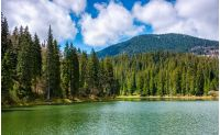 mountain lake Synevir among the green spruce forest in picturesque summer landscape. reflection in crystal clear water. beautiful springtime weather with blue sky and some clouds at sunrise