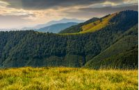 mountain ridge with forest on hills at sunrise. beautiful nature scenery in early autumn
