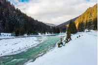 mountain river in winter. snow covered river banks. forest in snow on the distant mountain. cloudy morning