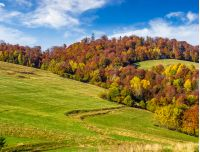 mountain rural area in autumn season. agricultural field on a hill near the forest with red foliage. beautiful and vivid landscape.