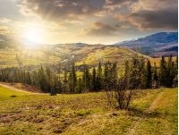 mountain rural area in springtime season. agricultural field on a hill near the spruce forest and village. beautiful and vivid landscape with snowy peaks in the distance at sunset