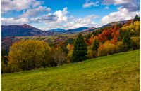 mountains with colorful foliage forest. great autumnal landscape in fine weather and clouds on blue sky