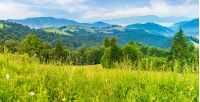 panorama of a beautiful grassy meadow in mountains at sunrise. spruce forest on a hillside. rolling hills fall down in to the foggy valley in the distance. wonderful summer landscape