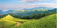 panorama of a summer countryside landscape in mountains. winding path down the grassy slope among conifer trees. rural fields on a distant hill. beautiful sunny weather at sunrise
