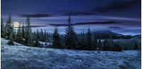 panorama of beautiful countryside in mountains at night in full moon light. spruce trees on the meadow. top of the snow covered ridge in the distance. wonderful nature scenery