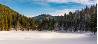panorama of spruce forest in winter mountains. gorgeous nature scenery