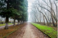 park in foggy conditions. path through row of trees. fallen foliage on the green grass. unusual mysterious winter weather