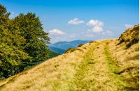 path through beech forest on a grassy hillside. Beautiful Carpathian landscape in early autumn