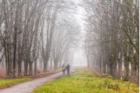 people walking by path among trees in foggy autumn park
