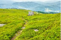 summer landscape. path through hillside meadow to the mountain peak
