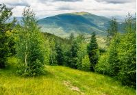 composite mountain landscape. path through the meadow in forest on a hillside. beautiful summer scenery