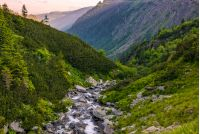 rapid stream in mountains at sunrise. rocky shore among green forest. beautiful carpathian landscape