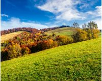 autumn  mountain landscape. yellow, red and orange trees on the hill side meadow