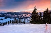 mountains covered with snow in red winter sunset. conifer trees on a snowy meadow near the village in valley. beautiful countryside landscape