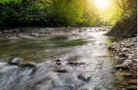 river flow in sunny forest. beautiful summer background