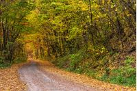 road; forest; nature; landscape; yellow; tree; yellow; grass; land; park; fall; cloudy; country; season; tranquil; wood; foliage; beauty; plant; solitude; outdoor; environment; freshness; countryside; light; ecology; autumn