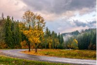 road; forest; nature; landscape; yellow; tree; yellow; grass; land; park; fall; cloudy; country; season; tranquil; lawn; woods; foliage; beauty; plant; solitude; outdoor; stormy; evening; environment; freshness; rainy; countryside; light; ecology; autumn; sky