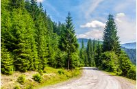 old cracked asphalt road going in mountains and passes through the green conifer forest