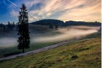 Rural landscape in mountains of Romania. Road through the hillside meadow in fog near the forest at sunrise