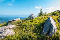rocks among the grass in mountains. beautiful sunrise landscape in summer. clear blue sky
