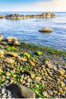 rocky coast with seaweed near the blue sea