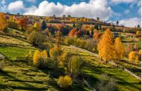 rural area on hillside in autumn. spectacular countryside scenery with yellow trees, fences and fields in fine weather condition