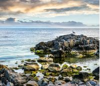 calm sea landscape with some wave near rocky coast with boulders and seaweed  in early morning