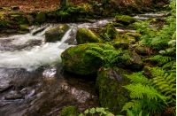 small cascades on the forest river among huge boulders covered with moss. dreamy Carpathian landscape